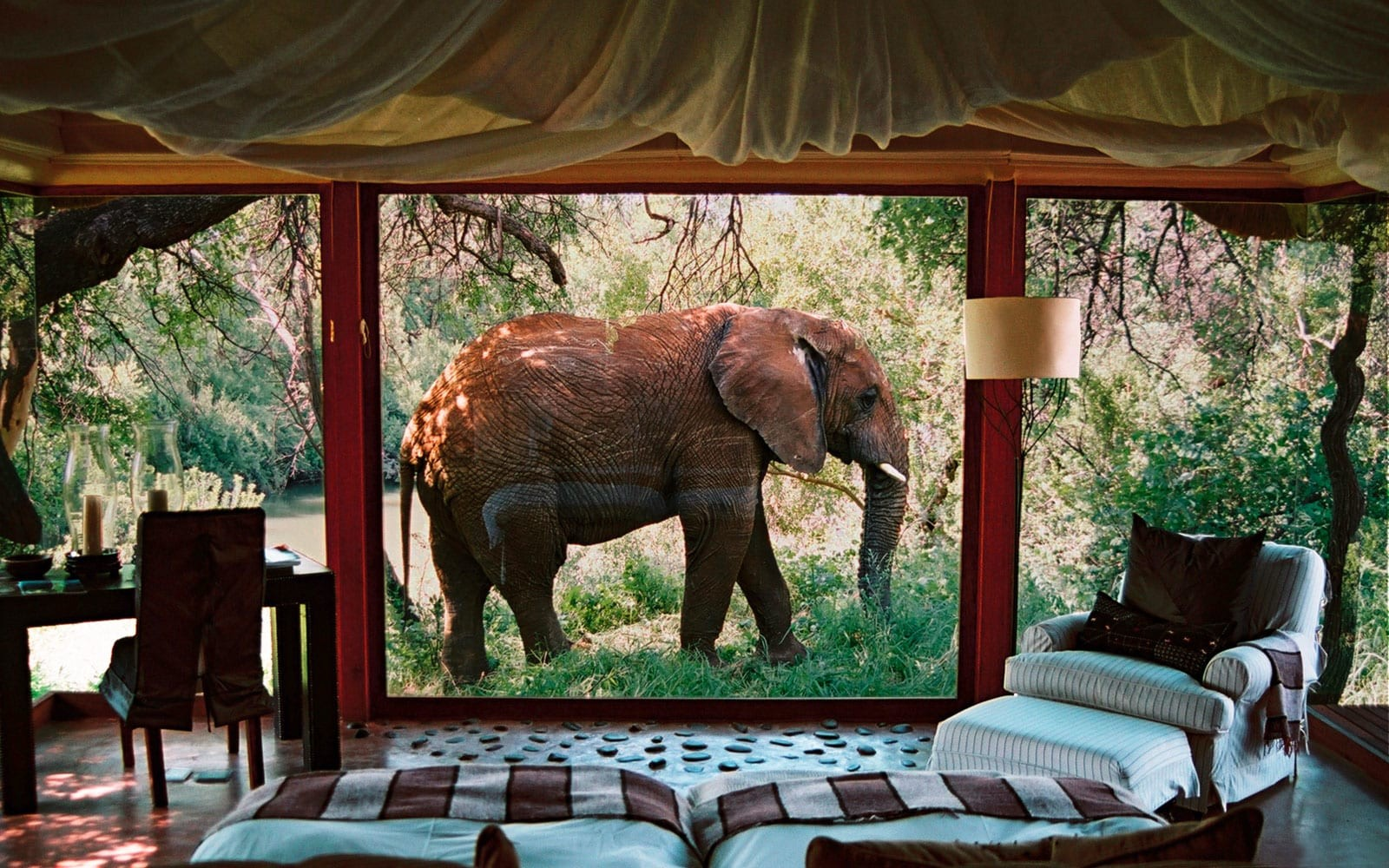 makanyane-safari-lodge-south-africa1.jpg