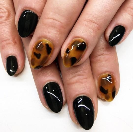 black-leopard.jpg