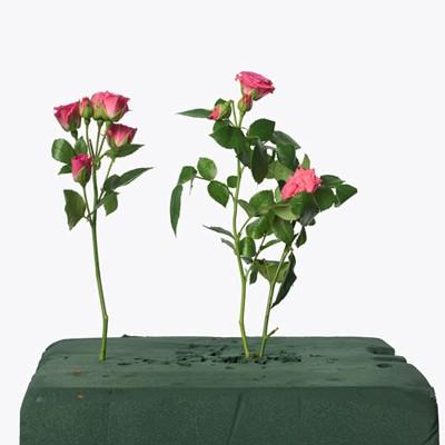 Www. λουλούδι ραντεβού ασιατικό