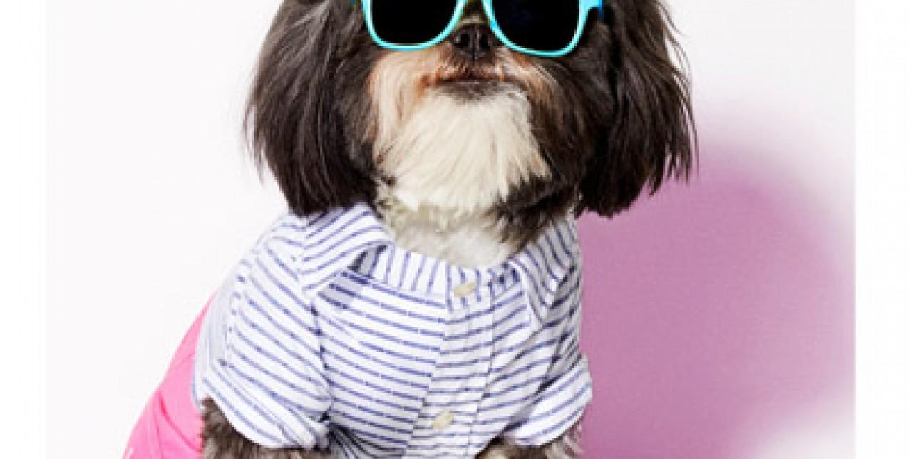 American Beagle