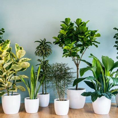 Δείτε πώς να φροντίσετε τα φυτά σας όταν θα λείπετε διακοπές